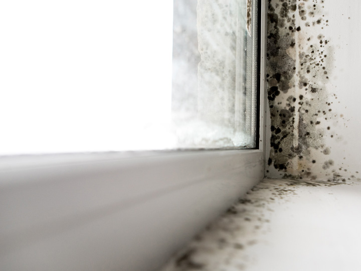 Mold and Moisture in the Home