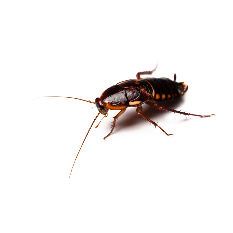 Roach Exterminators