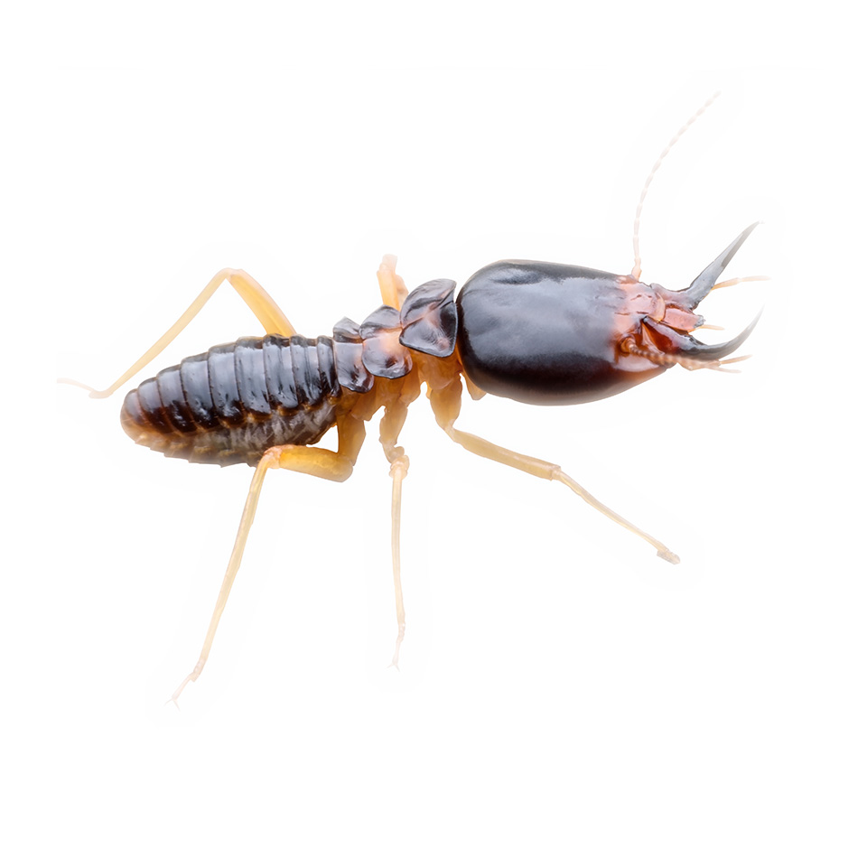 Termite Treatments
