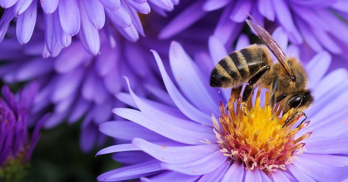 north carolina bees photo