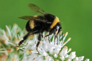 bugg busters bumblebee