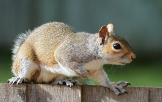 wildlife-animal-removal-services