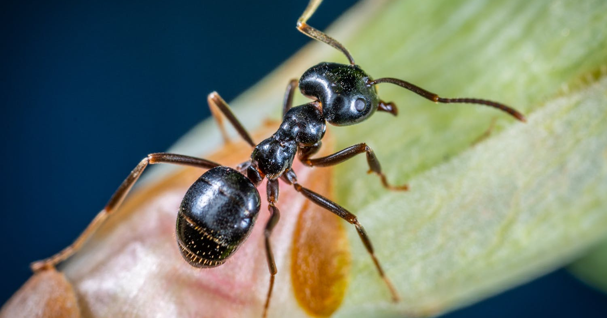 types of ants in north carolina blog banner photo